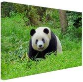 Grote panda in het gras Canvas 80x60 cm - Foto print op Canvas schilderij (Wanddecoratie woonkamer / slaapkamer) / Dieren Canvas Schilderijen