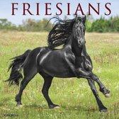 Friese Paarden Kalender 2020