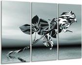 Glas schilderij Bloem, Roos | Grijs | 120x80cm 3Luik | Foto print op Glas |  F006289