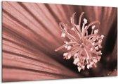 Glas schilderij Bloem   Bruin, Rood   120x70cm 1Luik   Foto print op Glas    F006448