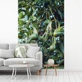 Fotobehang vinyl - Avocado's aan de boom breedte 175 cm x hoogte 260 cm - Foto print op behang (in 7 formaten beschikbaar)