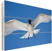 Een Zwaluwstaartmeeuw in de blauwe lucht Vurenhout met planken 30x20 cm - klein - Foto print op Hout (Wanddecoratie)