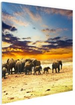 Kudde olifanten zonsondergang Glas 30x20 cm - Foto print op Glas (Plexiglas wanddecoratie)