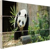 Grote panda Hout 80x60 cm - Foto print op Hout (Wanddecoratie)