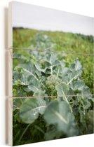 Verse broccoli dat groeit op een klein landbouwbedrijf Vurenhout met planken 30x40 cm - klein - Foto print op Hout (Wanddecoratie)