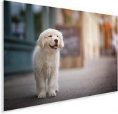 Een Golden Retriever puppy lopend op de stoep Plexiglas 90x60 cm - Foto print op Glas (Plexiglas wanddecoratie)