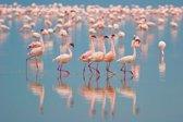 Papermoon Flamingos Vlies Fotobehang 250x186cm 5-Banen