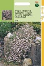 Hortitops Zaden - Gypsophila Repens Rose