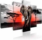 Schilderij - Eenzame Olifant , rood grijs , 5 luik , 2 maten
