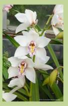 White Orchid 2014 Weekly Calendar