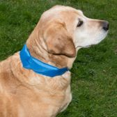 Koelings halsband hond / cooling band - DD-1720