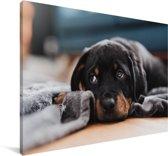 Schattige Rottweiler pup ligt op de vloer Canvas 180x120 cm - Foto print op Canvas schilderij (Wanddecoratie woonkamer / slaapkamer) / Huisdieren Canvas Schilderijen XXL / Groot formaat!
