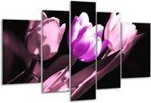Glasschilderij Tulp | Paars, Wit, Zwart | 170x100cm 5Luik | Foto print op Glas |  F003882