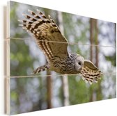 Oeraluil vliegt door het park Vurenhout met planken 120x80 cm - Foto print op Hout (Wanddecoratie)