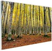 Gele bladeren in het bos in de herfst Glas 120x80 cm - Foto print op Glas (Plexiglas wanddecoratie)