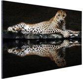 Luipaard bij het water Aluminium 120x80 cm - Foto print op Aluminium (metaal wanddecoratie)