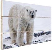 Portret van een ijsbeer Hout 120x80 cm - Foto print op Hout (Wanddecoratie)