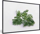 Foto in lijst - Verse absintalsem blad op een witte achtergrond fotolijst zwart 60x40 cm - Poster in lijst (Wanddecoratie woonkamer / slaapkamer)