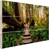 FotoCadeau.nl - Trap van gevallen bomen in jungle Hout 80x60 cm - Foto print op Hout (Wanddecoratie)