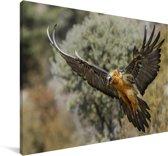 Lammergier met uitgestrekte vleugels Canvas 30x20 cm - klein - Foto print op Canvas schilderij (Wanddecoratie woonkamer / slaapkamer)
