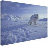 Poolvos in de sneeuw Canvas 30x20 cm - Foto print op Canvas schilderij (Wanddecoratie)