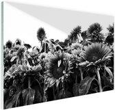 Zonnebloemen in Nederland zwart-wit Glas 90x60 cm - Foto print op Glas (Plexiglas wanddecoratie)