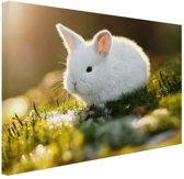Baby konijn op mos Canvas 80x60 cm - Foto print op Canvas schilderij (Wanddecoratie)