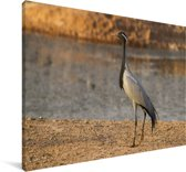 Jufferkraanvogel aan het water Canvas 90x60 cm - Foto print op Canvas schilderij (Wanddecoratie woonkamer / slaapkamer)
