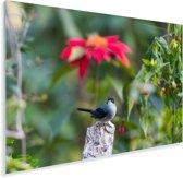 Timalia tussen de felgekleurde bloemen Plexiglas 90x60 cm - Foto print op Glas (Plexiglas wanddecoratie)