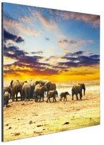 Kudde olifanten zonsondergang Aluminium 120x80 cm - Foto print op Aluminium (metaal wanddecoratie)