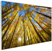 FotoCadeau.nl - Gele bladeren aan de bomen in het bos Glas 90x60 cm - Foto print op Glas (Plexiglas wanddecoratie)
