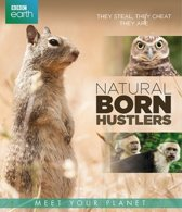 Bbc Earth - Natural Born Hustlers