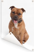 Poserende Staffordshire Bull Terrier Tuinposter 60x90 cm - Tuindoek / Buitencanvas / Schilderijen voor buiten (tuin decoratie)