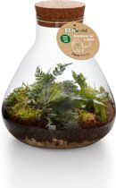 Ecoworld Jungle Biosphere ecosysteem planten - Piramide Glas - Ø 23 cm ↕ 26 cm