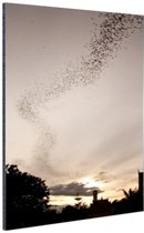 Grote groep vleermuizen Aluminium 80x120 cm - Foto print op Aluminium (metaal wanddecoratie)