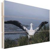 Reuzenalbatros spreidt zijn donkere vleugels Vurenhout met planken 60x40 cm - Foto print op Hout (Wanddecoratie)