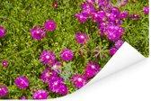 Aster bloemen tussen groene bladeren Poster 180x120 cm - Foto print op Poster (wanddecoratie woonkamer / slaapkamer) XXL / Groot formaat!