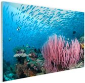 Rif met een school vissen Glas 180x120 cm - Foto print op Glas (Plexiglas wanddecoratie) XXL / Groot formaat!