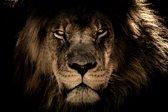 CANVASDOEK LEEUW | LION | Wanddecoratie | 150 CM x 100 CM | Schilderij | Aan de muur | Dieren | Natuur