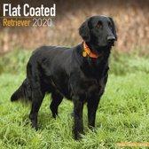 Flat Coated Retriever Calendar 2020