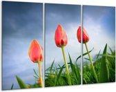 Glasschilderij Tulpen | Rood, Blauw, Groen | 120x80cm 3Luik | Foto print op Glas |  F002856