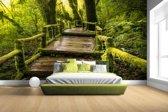 Mooi regenwoud en jungle Fotobehang 380x265