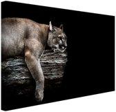 Liggende poema Canvas 120x80 cm - Foto print op Canvas schilderij (Wanddecoratie woonkamer / slaapkamer) / Dieren Canvas Schilderij