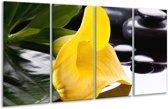 Glasschilderij Bloem   Geel, Zwart, Wit   160x80cm 4Luik   Foto print op Glas    F004043