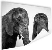 Nieuwsgierige olifanten zwart-wit Poster 60x40 cm - Foto print op Poster (wanddecoratie woonkamer / slaapkamer) / Dieren Poster