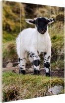 FotoCadeau.nl - Jong zwart-wit lam Hout 60x80 cm - Foto print op Hout (Wanddecoratie)