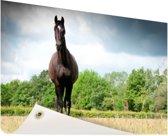 Merrie in een veld Tuinposter 60x40 cm - klein - Tuindoek / Buitencanvas / Schilderijen voor buiten (tuin decoratie)
