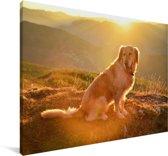 Zonnestralen schijnen over een Golden Retriever Canvas 30x20 cm - klein - Foto print op Canvas schilderij (Wanddecoratie woonkamer / slaapkamer) / Huisdieren Canvas Schilderijen