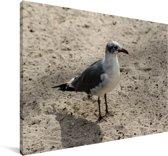 Lachmeeuw op het zand Canvas 120x80 cm - Foto print op Canvas schilderij (Wanddecoratie woonkamer / slaapkamer)