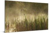 Moeras in het Nationaal park Forillon in Canada Aluminium 90x60 cm - Foto print op Aluminium (metaal wanddecoratie)